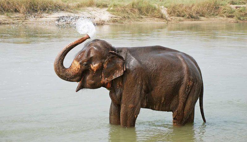 Слон Нингнонг укрыл девочку от цунами