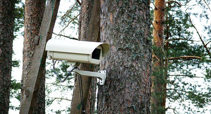 Противопожарное видеонаблюдение в лесных массивах