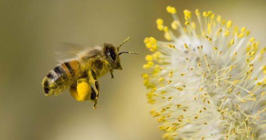 Пчела и нектар