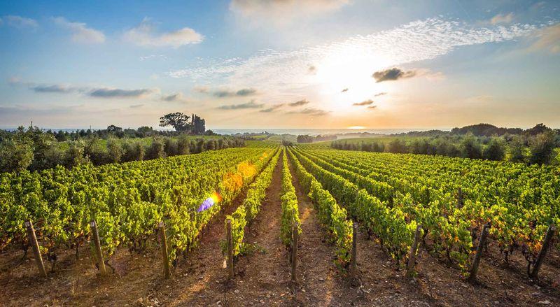 Виноградники Болгери