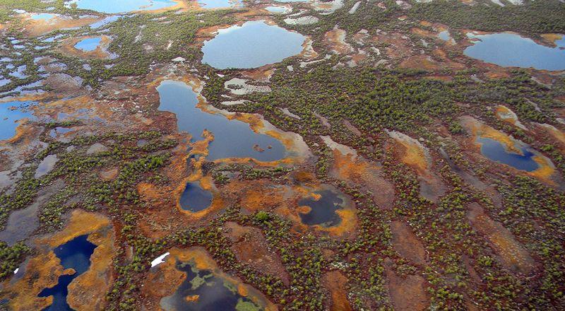 Васюганское болото - гигантский естественный фильтр