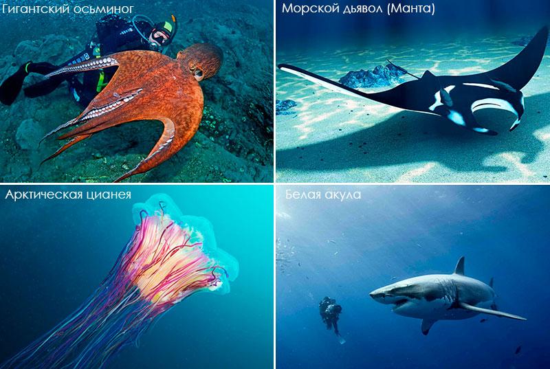 Удивительные морские обитатели