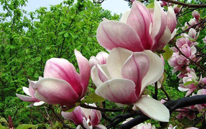 Видеть во сне цветущие деревья: трактовка в соннике.