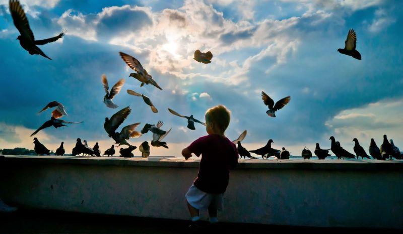 Городские голуби
