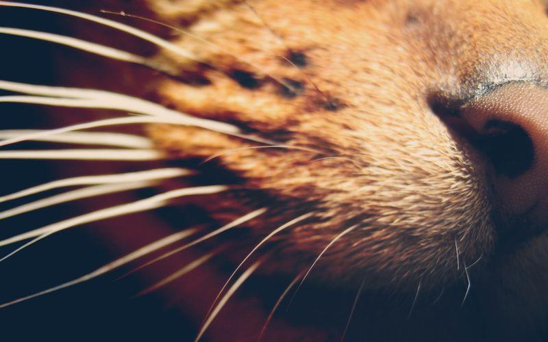 Кошачьи усы