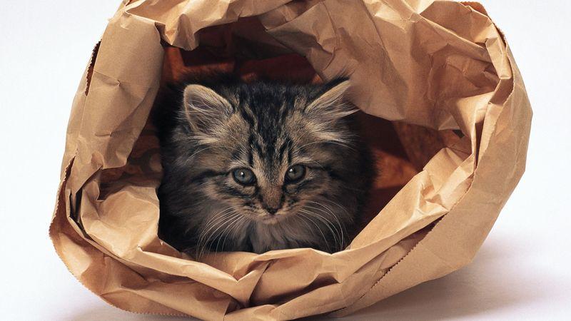 Шуршащая бумага и коты