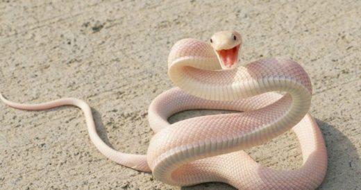 Удивительный мир змей