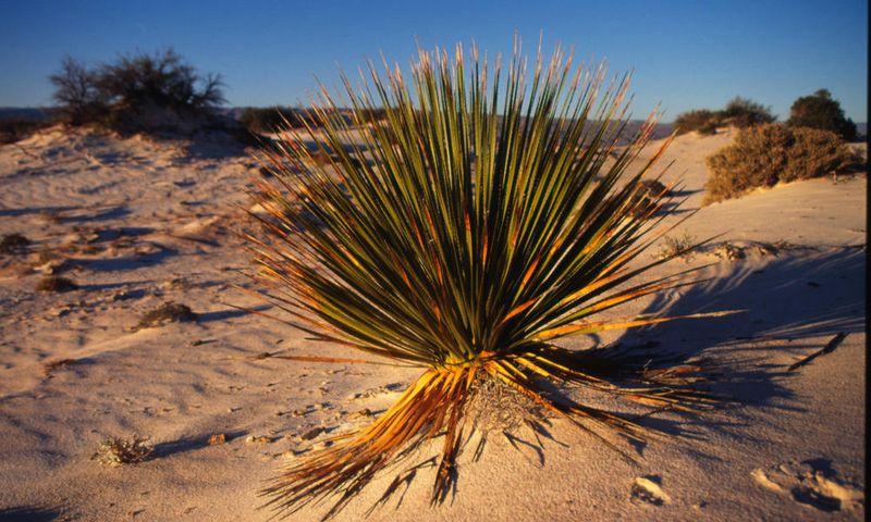 Пустынная растительность