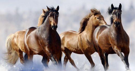 Кони бегут