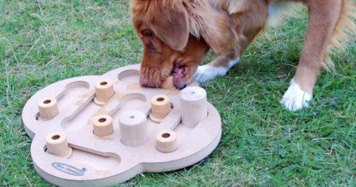 Развивающая игра для собаки