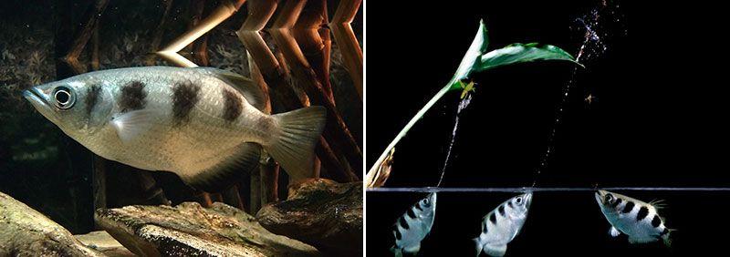 Удивительный мир рыб