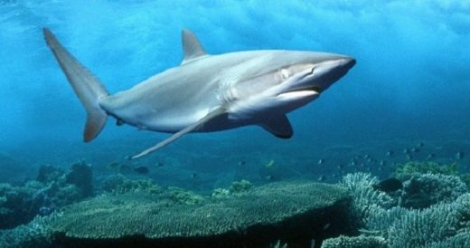 Удивительные акулы