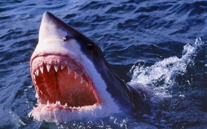 Челюсти акулы
