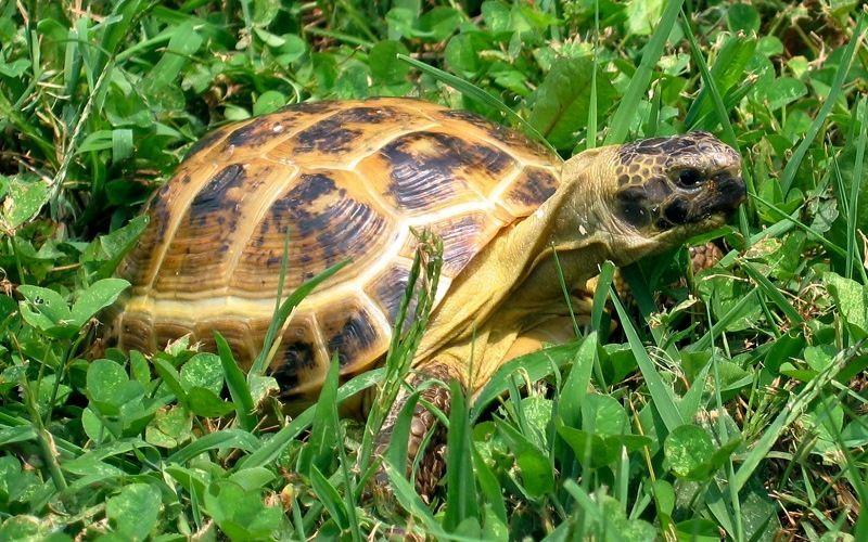 Удивительные черепахи интересные факты