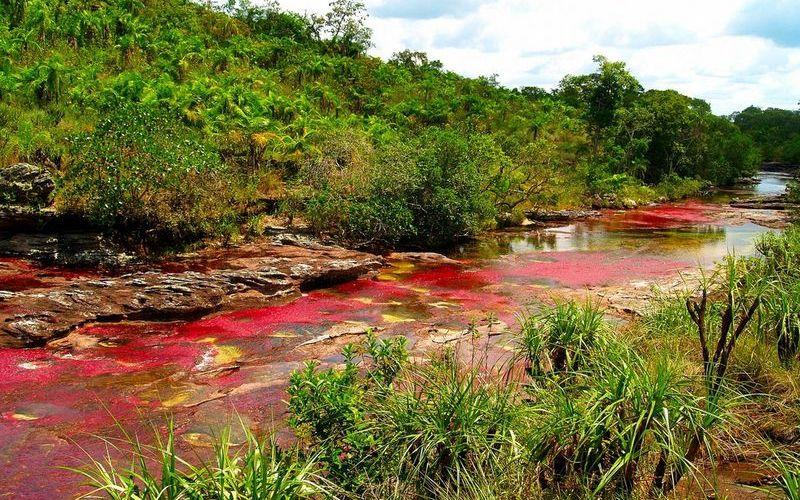 Цветная река Каньо Кристалес