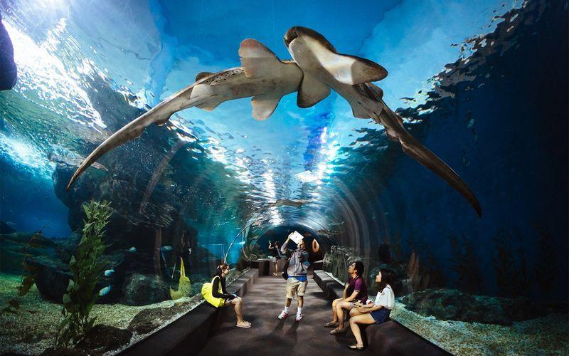 Аквариум Siam Ocean World.