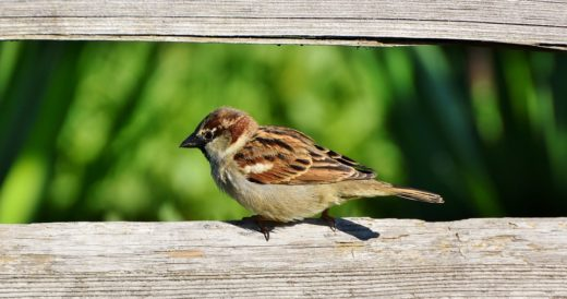 детские загадки о птицах