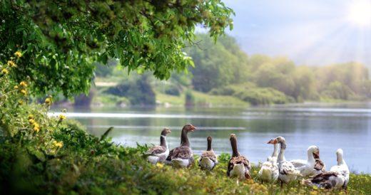 загадки о природе и животных