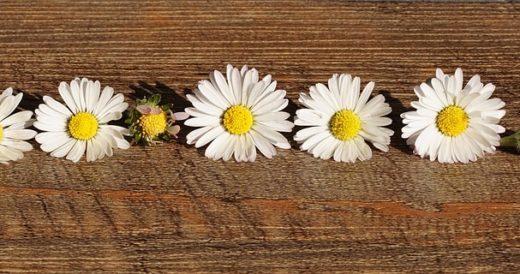 статусы о цветах