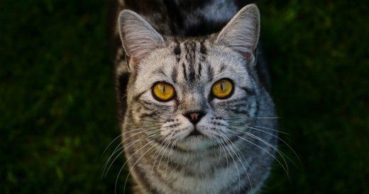 статус про кошку