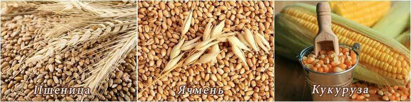 Пшеница ячмень кукуруза