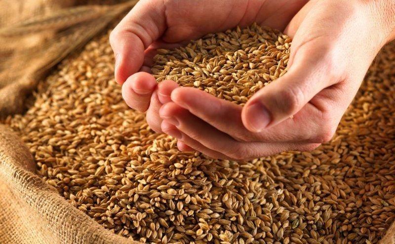 Качественное зерно