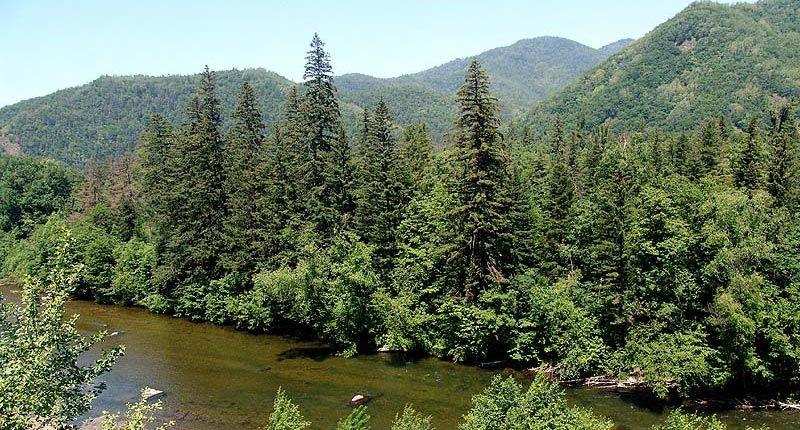 Таежные леса Евразии