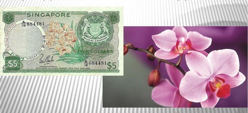 Орхидея – символ Сингапура