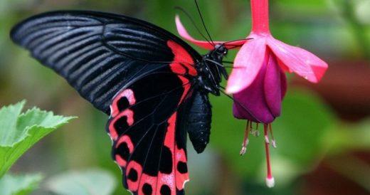 Удивительные факты о бабочках