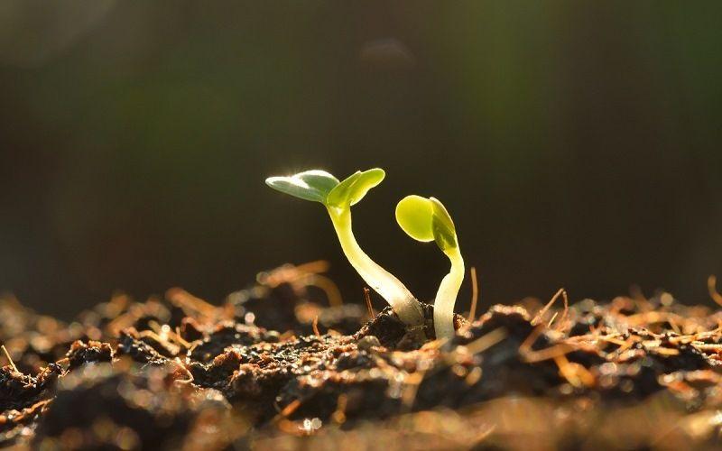 Влияние музыки на рост растений