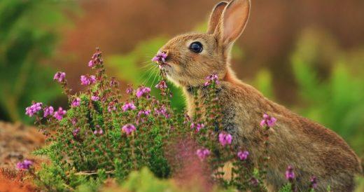 Удивительные факты о зайцах