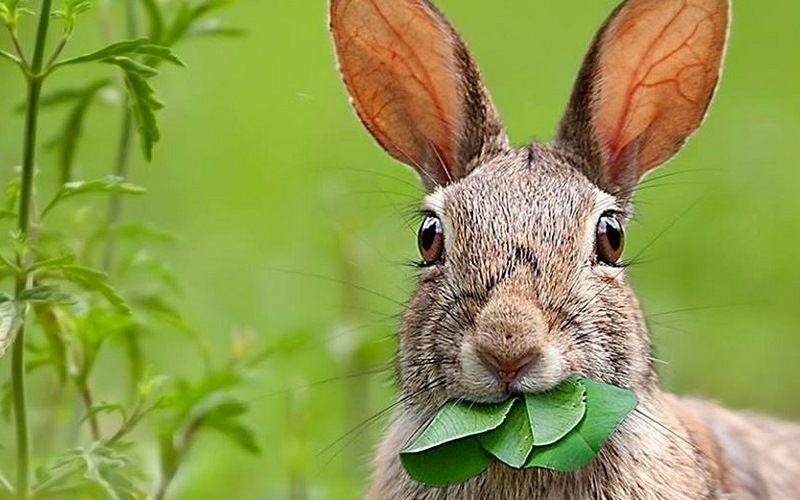 Чем питаются зайцы