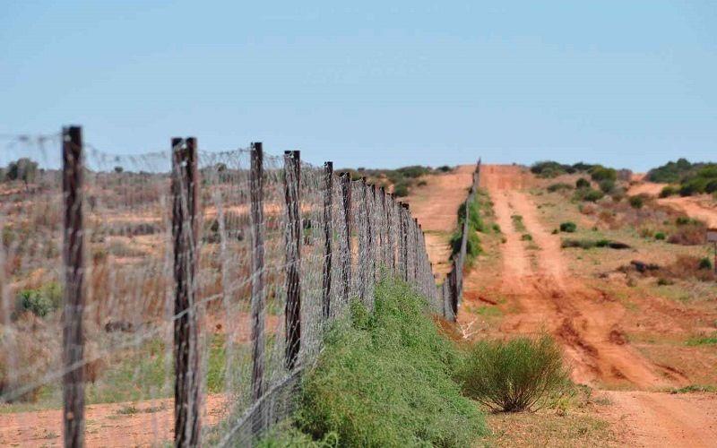 Забор динго в Австралии