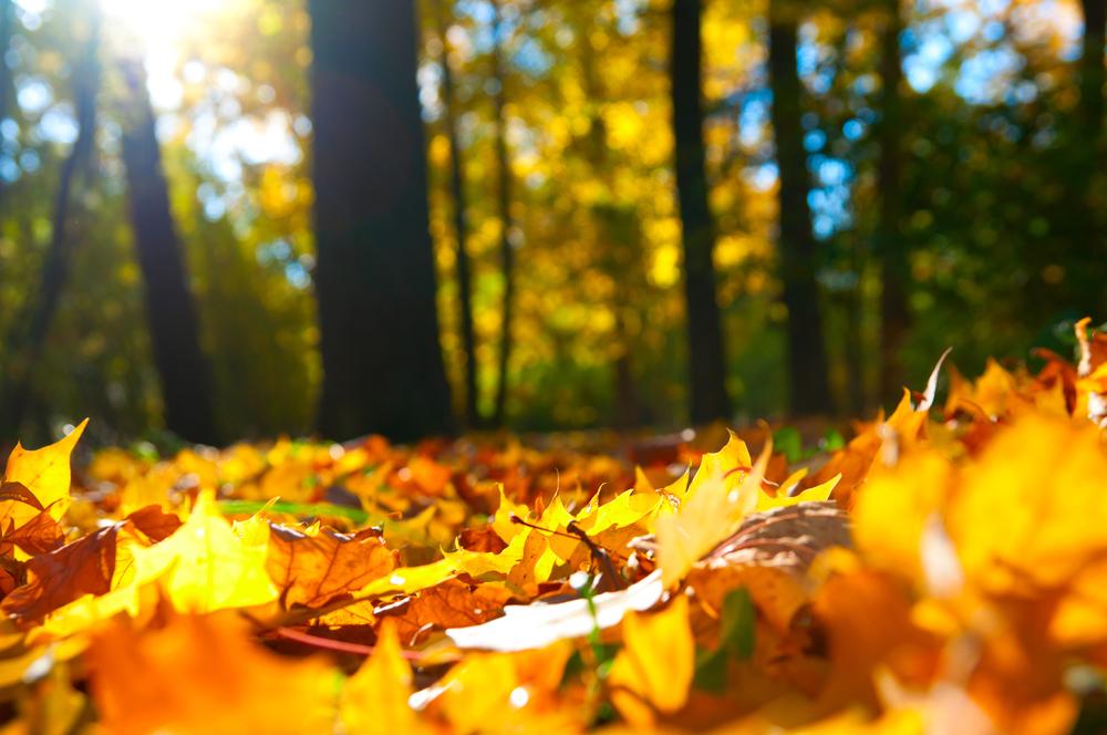 красивый сентябрь