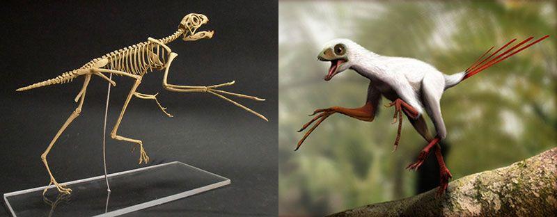 Самые необычные динозавры внешний вид диметродона