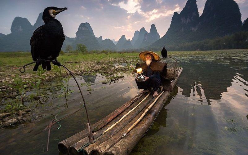 Рыбалка по-китайски с бакланами