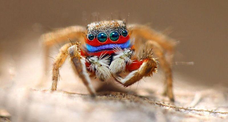 Зрение у пауков