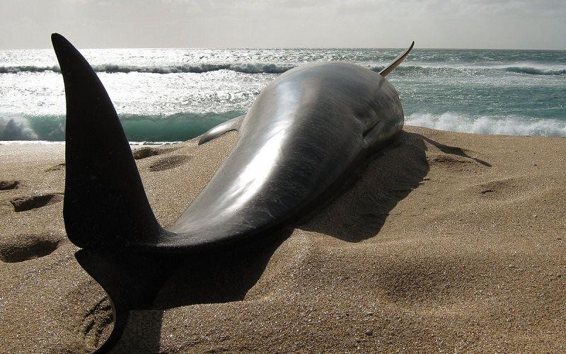 Дельфины способны совершить суицид