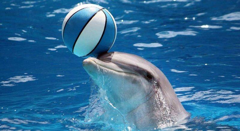 Интеллект дельфина