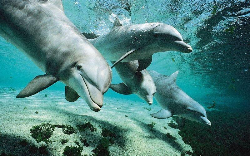 Язык общения дельфинов