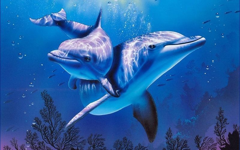 Способность дельфинов к регенерации