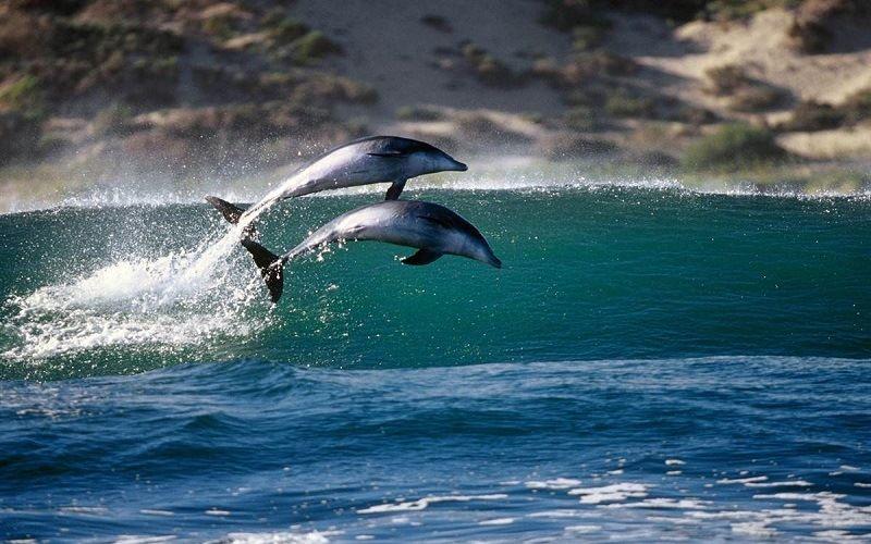 Ныряющие дельфины