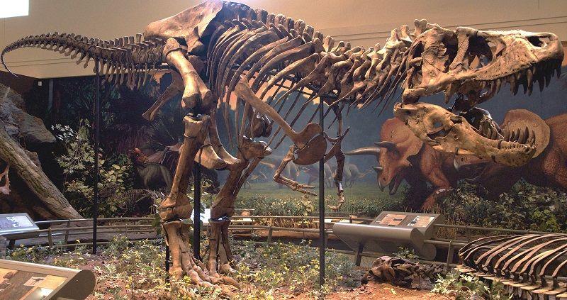 Интересные находки останков динозавров