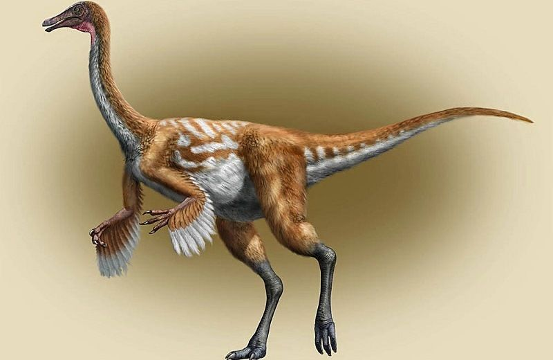 Галимим—страусоподобный динозавр