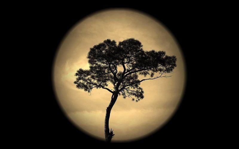 """""""Лунные"""" семена деревьев"""