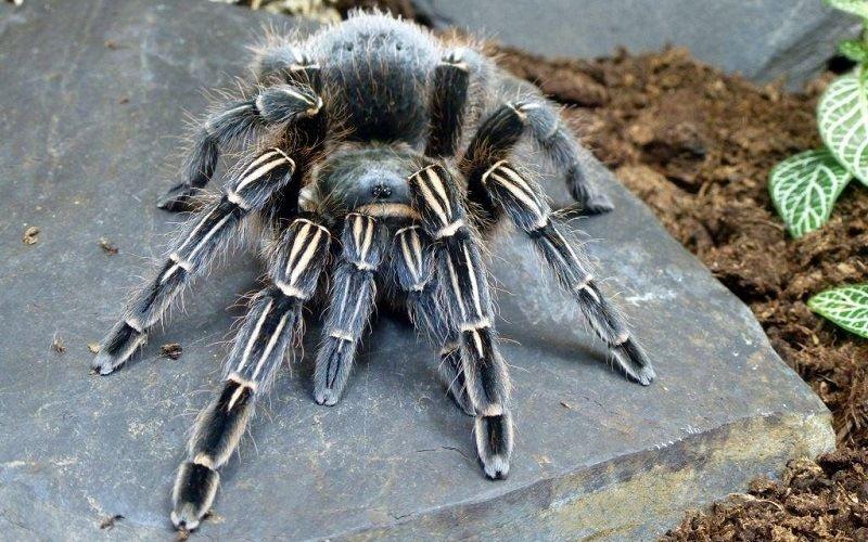 Интересное о пауках