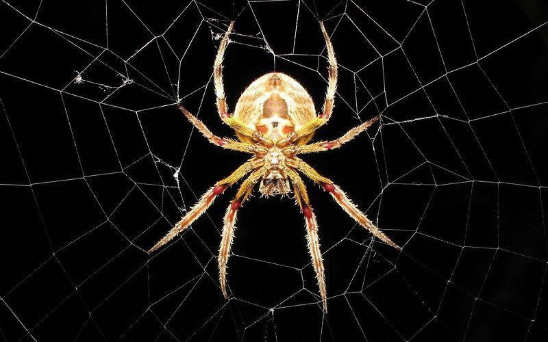 Чем питается паук