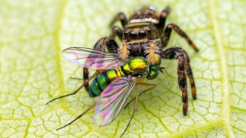 Особенности пищеварения у пауков