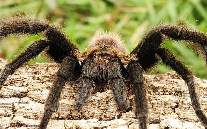 Как слышит паук
