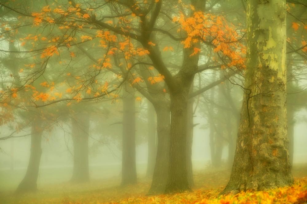 деревья в тумане осенью